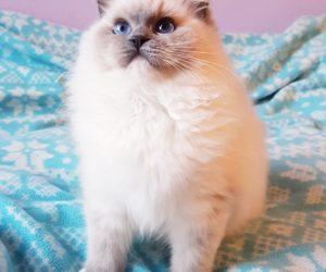 Masza Cat Domination*PL